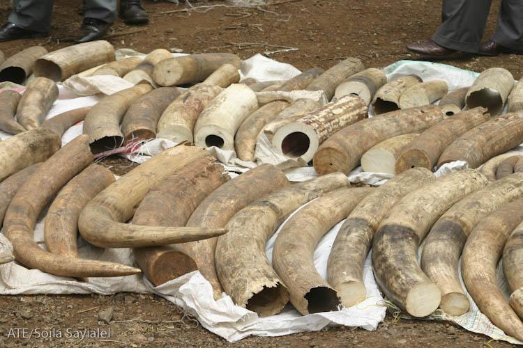 Elephant Ivory