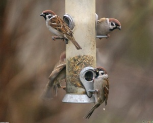 sparrows_1_2048x1660 (2)